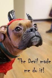 Halloween Costumes Boxer Dogs Boxer U0027s Halloween Costume Longer