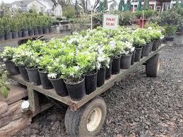 native plant nursery portland oregon twin oaks nursery