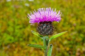 growing native plants from seed what u0027s in your northern ireland wild flower seed mix grow wild