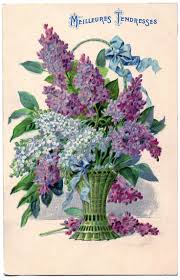 271 best flowers lovely lilacs images on pinterest flowers