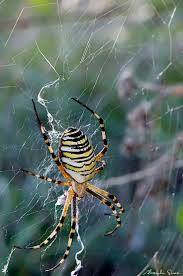 712 best insects arachnids images on pinterest spider webs