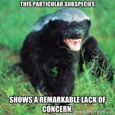 Honeybadger Meme - honey badgers honey badger venom and snake