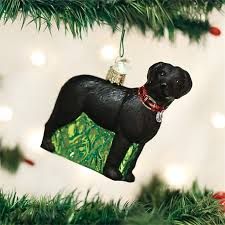 world standing black labrador retriever glass tree