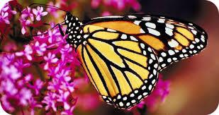meaningful butterfly ideas
