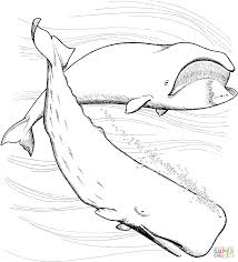 whale coloring page free printable coloring pages