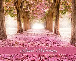 good morning hd wallpaper collection 1920 1200 wallpaper good