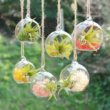 small hanging glass vase air plant terrarium air plants