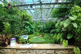Garden Botanical About Botanic Garden Of Bristol