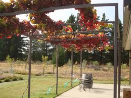 vines that grow in shade have kiwivine on trellis on home design