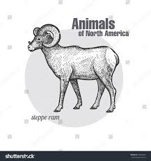 steppe ram hand drawing animals north stock vector 609403076