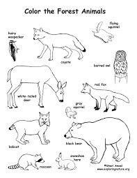 Forest Animals Coloring Pages Forest Animals Coloring Page