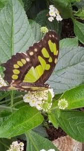 sensational butterflies at the natural history museum the parent
