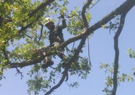 longview tree services tree removal trimming care longview tx