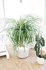 18 best indestructible indoor plants images on pinterest indoor