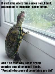 Turtle Memes - deep thoughts turtle funny