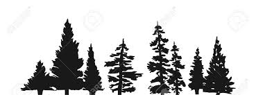 pine tree silhouette royalty free cliparts vectors and stock