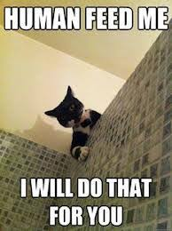 Feed Me Meme - human feed me cat meme cat planet cat planet