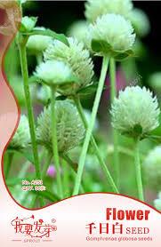 Cheap Flower Seeds - online get cheap dried flower seeds aliexpress com alibaba group
