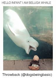 Whaling Meme - hello infant iam beluga whale throwback funny meme on me me