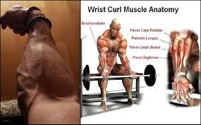 Best Forearm - best wrist and forearm workout sport fatare