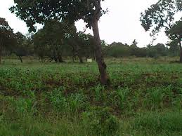 land for sale in mabokoni kwale diani beach kenya property diani