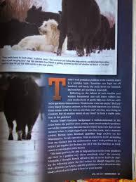 Articles Main Title The Spanish Mastiff Livestock Guardian Dog Lgds Guarding Cattle