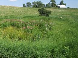 native plants minnesota restoring the landscape with native plants creation of a prairie pond