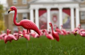 the pink flamingo of one of s greatest pranks loses