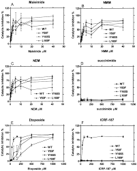 maleimide is a potent inhibitor of topoisomerase ii in vitro and