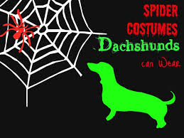Dog Spider Halloween Costume 25 Dog Spider Costume Ideas Spider Dog