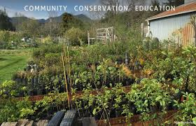 edge of the woods native plant nursery native plant nursery u2013 lower nehalem community trust