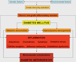 pathogenic perspectives for the role of inflammation in diabetic