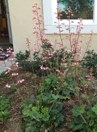 wildtype native plant nursery ca native garden clone invasion