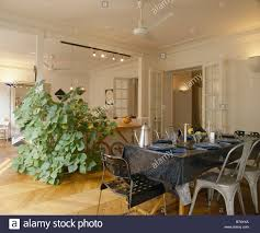 tall houseplant beside large wall mirror in apartment dining room