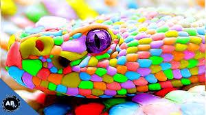 colorful giant snakes snakebytestv ep 413 animalbytestv youtube