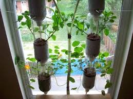 Window Sill Garden Inspiration Indoor Herb Garden Indoor Herbs Garden Ideas Picture
