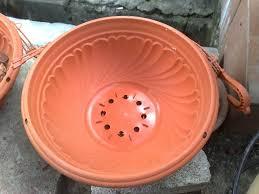how to restore waterlogged pot plants the micro gardener