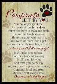 pet prayer 7 quotes that ll help you cope with losing your pet dog