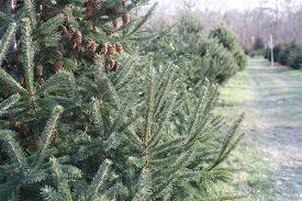 christmas tree bailer christmas lights decoration