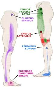 Back Knee Anatomy A Hip Muscle That Causes Knee And Ankle Pain The Julstro Pain