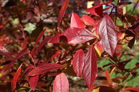 seasonal gardening u2013 california native 100 planting fruit trees in fall practical permaculture