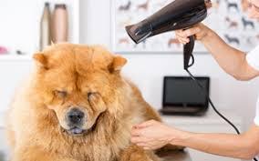 man u0027s best friend dog grooming dog groomer south lyon