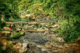 Rock Garden Darjeeling Barbotey Rock Garden Picture Of Barbotey Rock Garden Darjeeling