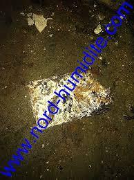 urine de sur canapé odeur urine canapé awesome merule dans cave humide humidite hd