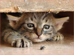 Can Bed Bugs Live On Cats Can Cats Get Bed Bugs Best Photos Animals 2017