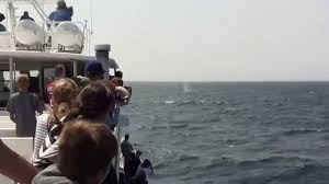 dolphin fleet whale watch of provincetown cape cod youtube