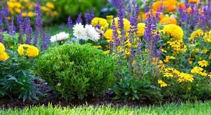 how to improve border soil love the garden