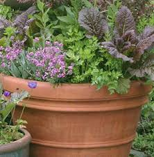 Vegetable Gardening In Pots by Best 25 Organic Container Gardening Ideas On Pinterest