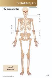 Human Anatomy Flashcards Anatomy U0026 Physiology Flash Cards U2013 Scientific Publishing