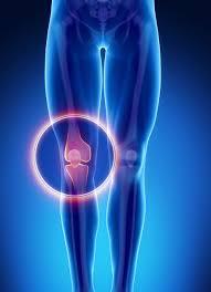 Knee Bony Anatomy Male Bone Anatomy Knee U2013 The S M A R T Clinic